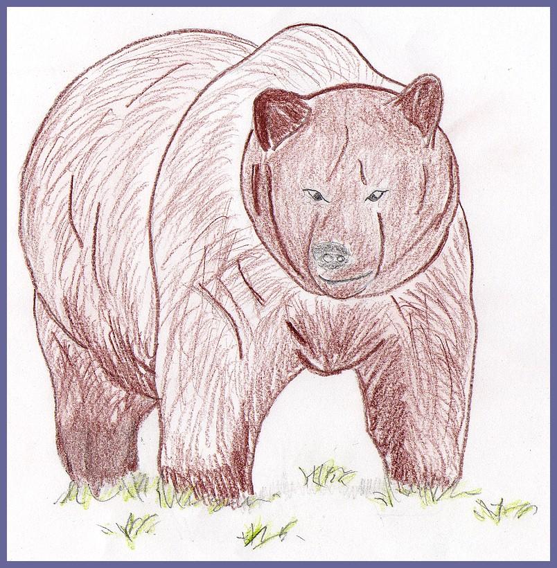 Coll ge jules romains de saint avertin l 39 ours brun pendant l 39 hiver - Comment dessiner un ours ...