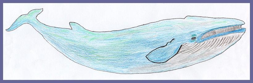 Coll ge jules romains de saint avertin la baleine bleue - Comment dessiner une baleine ...